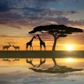 Giraffes with Kudu — Stock Photo