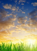 Fresh dewy green grass at sunrise — Stock Photo