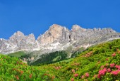 Dolomit toppar, rosengarten — Stockfoto