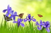 Iris flowers with dewy grass — Stock Photo