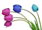 Dewy colorful tulips — Stock Photo