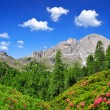 Dolomite peaks, Rosengarten — Stock Photo #62591787