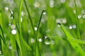 Fresh green grass with dew drop closeup — Stockfoto