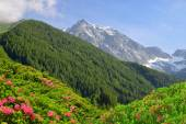 View of the mountains from the valley Antholzertal — Stock Photo