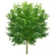 Tree — Stock Photo #63876407