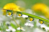 Dew drops closeup — 图库照片