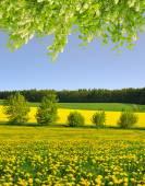 Dandelions on the meadow — Stock Photo