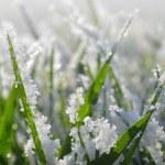 Frozen green grass close up. — Stock Photo #70405707