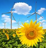 Sunflower field with wind turbines — Stock Photo