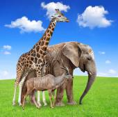 Giraffe with elephant and kudu — Stock Photo