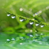 Dew drop closeup — Stock Photo