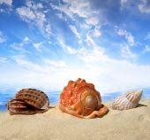Sea shells on beach — Stock Photo