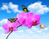 Purple orchid with butterflies — Stock Photo