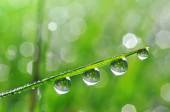 Fresh green grass with dew drops closeup — Stock Photo