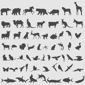 Animal icons set. — Stock Vector