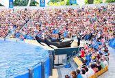 Orca ocean show — Foto de Stock