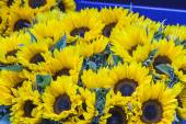 Bouquets of sunflowers on a counter of the flower market — Foto Stock