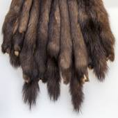 The skins of a sable prepared for tailoring of a product — Stok fotoğraf