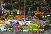 Rome, Italy, on February 26, 2010. Flower shop in the city market — Foto de Stock
