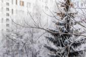 View from the window on the winter city and trees covered with snow — Stockfoto