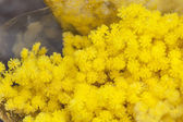 Mimosa bouquet on a counter of flower shop — Stock Photo