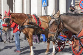 Rome, Italy, on March 6, 2015. A horse vehicle on the city street, a tourist attraction — Stock Photo