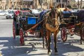 Rome, Italy, on March 6, 2015. A horse vehicle on the city street, a tourist attraction — Стоковое фото