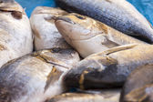 Fresh sea fish on a counter of the fish market — Stock Photo