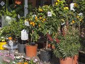 销售各种花卉花卉市场里的 — 图库照片