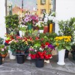 Various bouquets of flowers on a street show-window of flower shop — Stock Photo #76652133