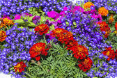 Flowers in an urban environment — Stock Photo