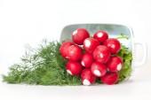 Fresh garden radish and fennel — Stock Photo
