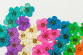 Decorative montage compilation of colorful dried spring flowers — Stock Photo