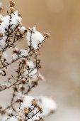 Snowy plant — Stockfoto