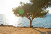 Sea and a tree in Greece — Stock Photo