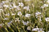 White flower — Stock Photo