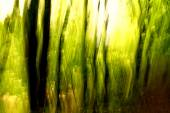 Blurred trees background — Stockfoto