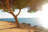 Sea and tree in Greece — Stock Photo