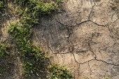 Parched land with grass — Stock Photo