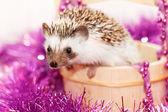 Cute little hedgehog — Stock Photo