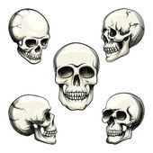 Views of human skull — Stock Vector