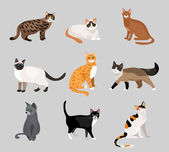 Set of cute cartoon kitties or cats — Stock Vector