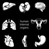 Silhuetas de órgãos humanos — Vetor de Stock