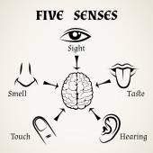 Five senses icons — Stock Vector