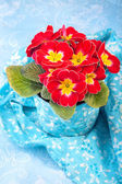 Primrose in the floral pot — Stock Photo