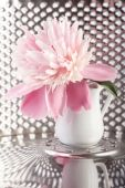 Peony in future — Stock Photo