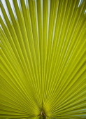 Green palm leaf viewed against bright sunlight — Stock Photo