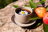 Tea with chamomile and apples on stone — Foto Stock