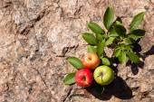 新鲜的苹果,在大石头上 — 图库照片