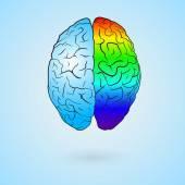 Colored brain — Stock Vector